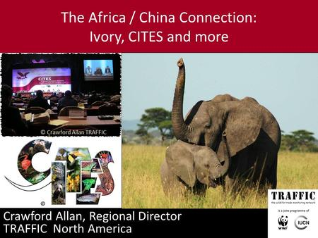 The Africa / China Connection: Ivory, CITES and more Crawford Allan, Regional Director TRAFFIC North America © Crawford Allan TRAFFIC.
