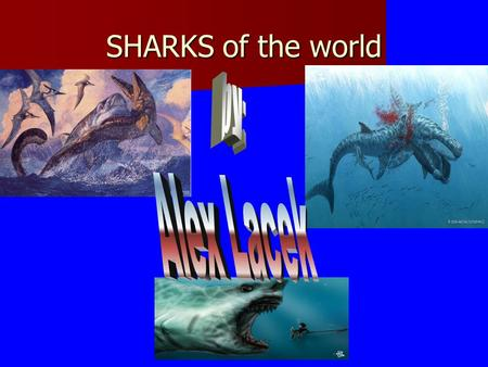 SHARKS of the world. The only thing that sharks are hunted by is humans. The reason why humans hunt them is because of the shark attacks over the years.