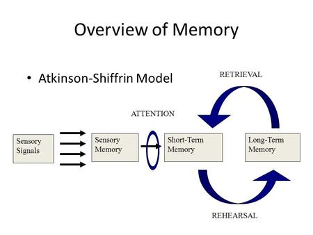 Overview of Memory Atkinson-Shiffrin Model Sensory Signals Sensory Memory Short-Term Memory Long-Term Memory ATTENTION REHEARSAL RETRIEVAL.