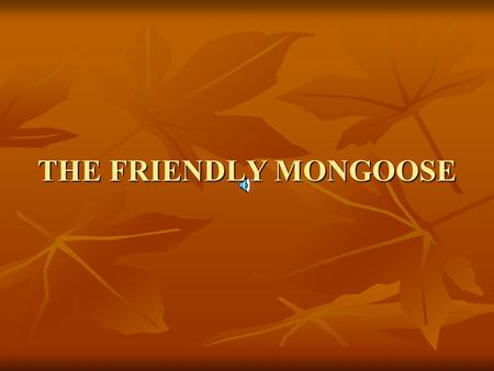 THE FRIENDLY MONGOOSE.