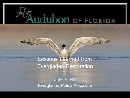 Lessons Learned from Everglades Restoration Julie A. Hill Everglades Policy Associate.