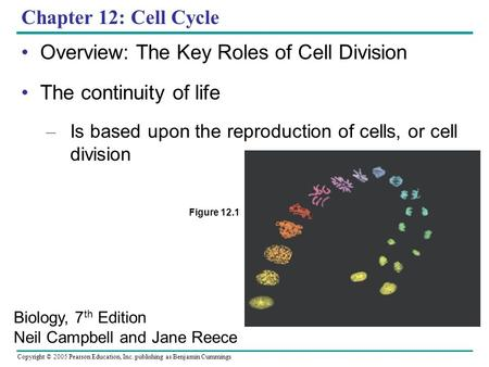 Copyright © 2005 Pearson Education, Inc. publishing as Benjamin Cummings Chapter 12: Cell Cycle Overview: The Key Roles of Cell Division The continuity.