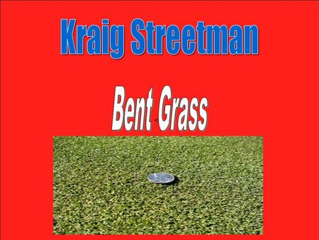 <>. Bent Grass is a fine-textured turf that is most commonly found in the Pacific Northwest and Northwestern areas of Canada. It is most found in areas.