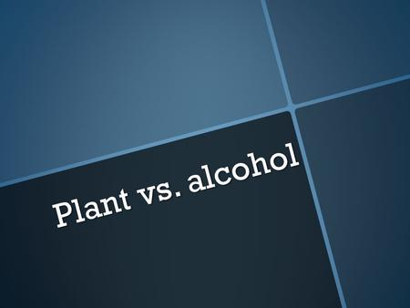 Plant vs. alcohol. What happens if a human drinks rubbing alcohol?  They get sick  They get drunk (in some cases)  They die.