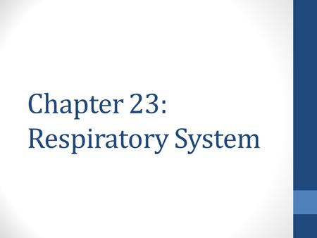 Chapter 23: Respiratory System. 4 Parts of Respiration Ventilation – the movement of air into and out of the lungs External gas exchange – between the.