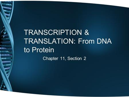 TRANSCRIPTION & TRANSLATION: From DNA to Protein Chapter 11, Section 2.