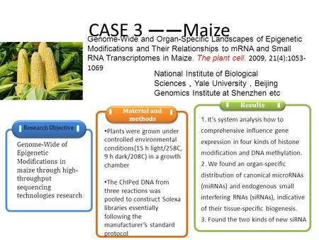 CASE 3 ——Maize Genome-Wide and Organ-Specific Landscapes of Epigenetic Modifications and Their Relationships to mRNA and Small RNA Transcriptomes in Maize.