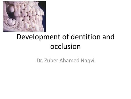 Development of dentition and occlusion Dr. Zuber Ahamed Naqvi.