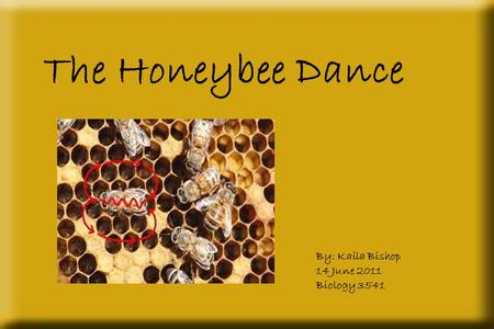 The Honeybee Dance By: Kaila Bishop 14 June 2011 Biology 3541.