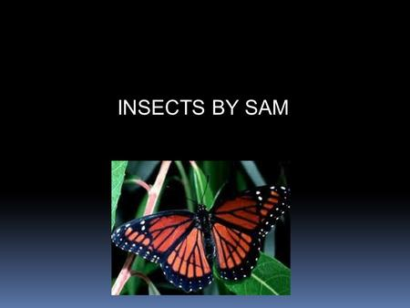 INSECTS BY SAM.