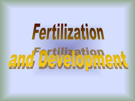 A. Internal Fertilization 1. Penis deposits sperm into the vagina 2. Fertilization of the egg usually occurs in the fallopian tubes (oviducts)