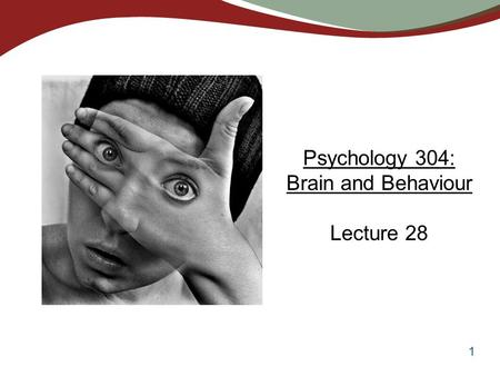 1 Psychology 304: Brain and Behaviour Lecture 28.