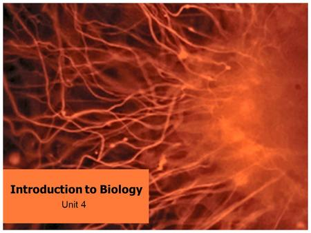 Introduction to Biology Unit 4. BIOLOGY BIO= Life OLOGY= study of BIOLOGY = Study of Life!