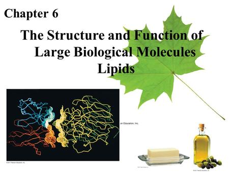 Chapter 6 The Structure and Function of Large Biological Molecules Lipids.