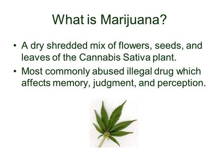 What is Marijuana? A dry shredded mix of flowers, seeds, and leaves of the Cannabis Sativa plant. Most commonly abused illegal drug which affects memory,
