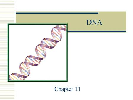 DNA Chapter 11. The main nucleic acids  There are 2 main nucleic acids  1. DNA: Deoxyribonucleic Acid  2. RNA: Ribonucleic Acid.