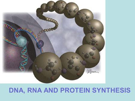 DNA, RNA AND PROTEIN SYNTHESIS. DNA (DEOXYRIBONUCLEIC ACID) Nucleic acid that composes chromosomes and carries genetic information.