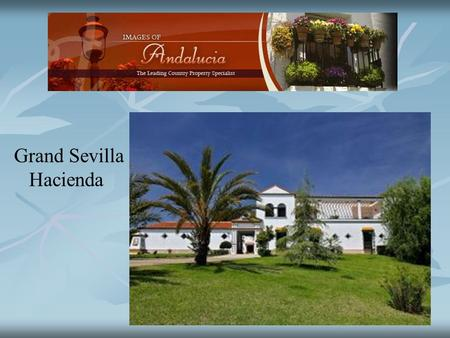 Grand Sevilla Hacienda. Set in 23 hectares of land with 17 hectares of olive plantation producing the variety Manzanilla. The olive production is around.