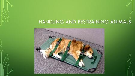HANDLING AND RESTRAINING ANIMALS. NEXT GENERATION SCIENCE / COMMON CORE STANDARDS ADDRESSED! CCSS.ELA-Literacy.SL.11-12.1.c CCSS.ELA-Literacy.SL.11-12.1.c.