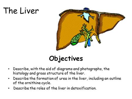 The Liver Objectives Describe, with the aid of diagrams and photographs, the histology and gross structure of the liver. Describe the formation of urea.