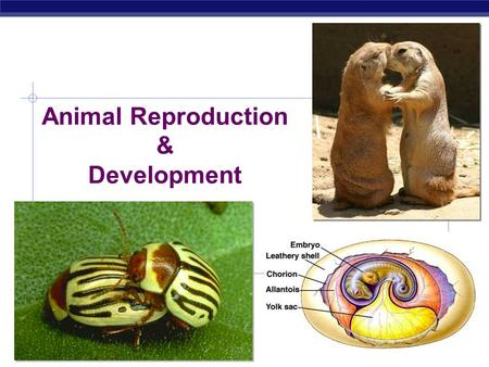 AP Biology 2007-2008 Animal Reproduction & Development.