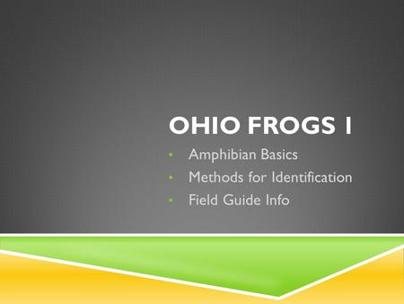OHIO FROGS 1 Amphibian Basics Methods for Identification Field Guide Info.