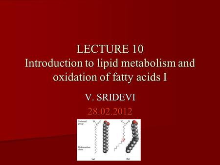 LECTURE 10 Introduction to lipid metabolism and oxidation of fatty acids I V. SRIDEVI 28.02.2012.