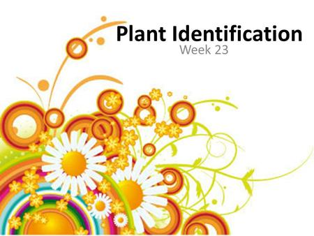 Plant Identification Week 23.