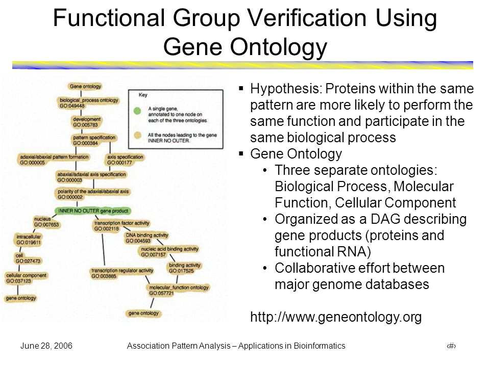 June 28, 2006 Association Pattern Analysis – Applications in Bioinformatics 15 Function Annotation for Hyperclique { PRE2 PRE4 PRE5 PRE6 PRE8 PRE9 PUP3 SCL1 }  GO hierarchy shows that the identified proteins in hyperclique perform the same function and involved in same biological process