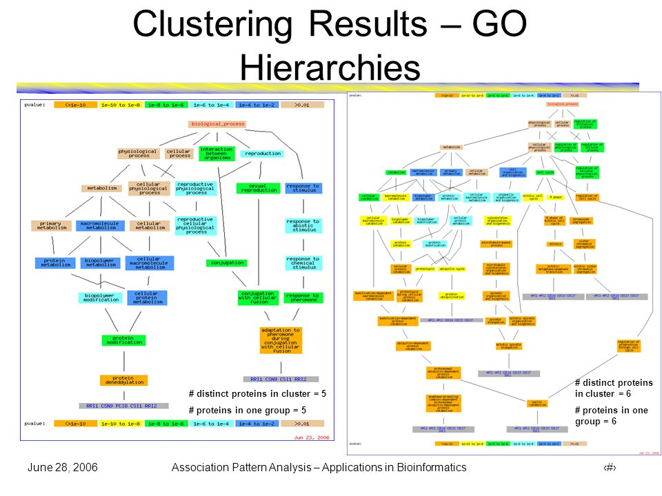 June 28, 2006 Association Pattern Analysis – Applications in Bioinformatics 28 Clustering Results – GO Hierarchies  Proteins MNN10 and ANP1 (denoted by ) involved in metabolism got clustered together with group of proteins involved in physiological process # distinct proteins in cluster = 6 # proteins in one group = 4
