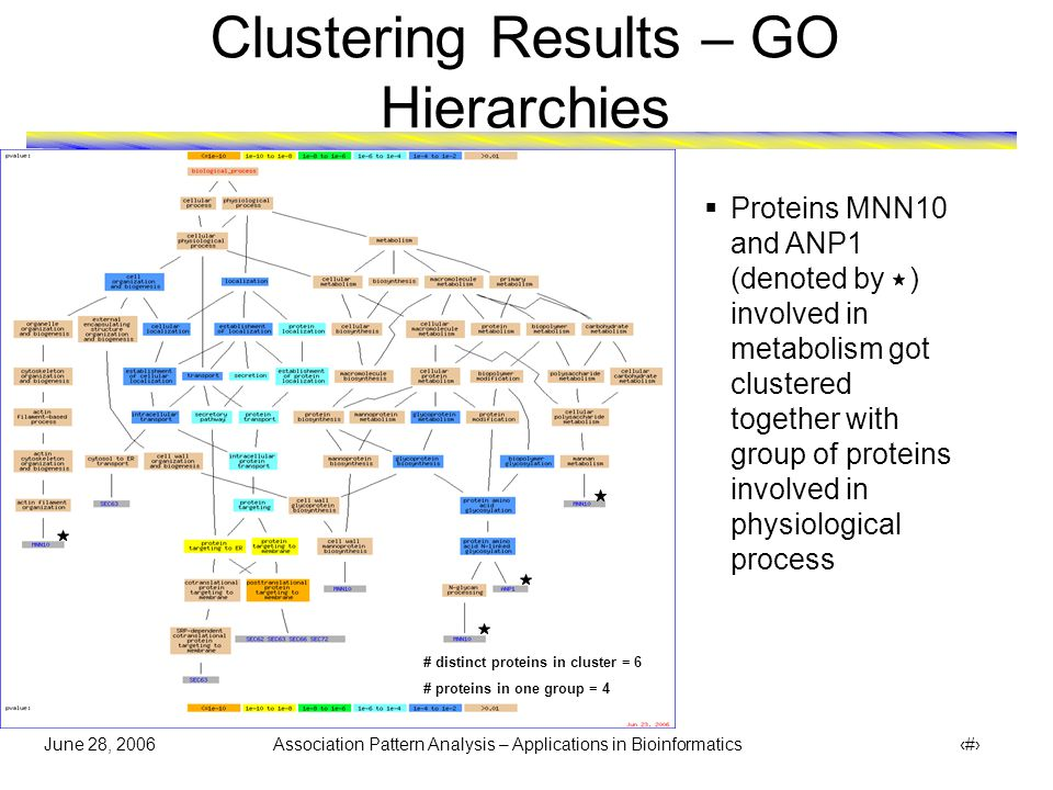 June 28, 2006 Association Pattern Analysis – Applications in Bioinformatics 29 Clustering Results – GO Hierarchies # distinct proteins in cluster = 11 # proteins in one group = 10  Protein SKN1 (denoted by ) involved in metabolism got clustered together with proteins involved in cellular physiological process