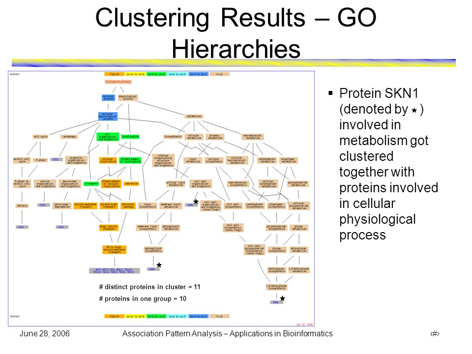June 28, 2006 Association Pattern Analysis – Applications in Bioinformatics 30 Clustering Results – GO Hierarchies # distinct proteins in cluster = 30 # proteins in one group = 22 Group of 22 proteins