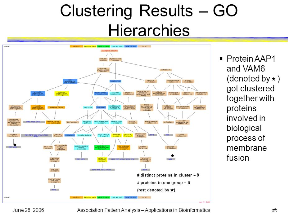 June 28, 2006 Association Pattern Analysis – Applications in Bioinformatics 34 Clustering Results – GO Hierarchies  Protein AAP1 and VAM6 (denoted by ) got clustered together with group of proteins involved in biological process of membrane fusion # distinct proteins in cluster = 8 # proteins in one group = 4 (rest denoted by )