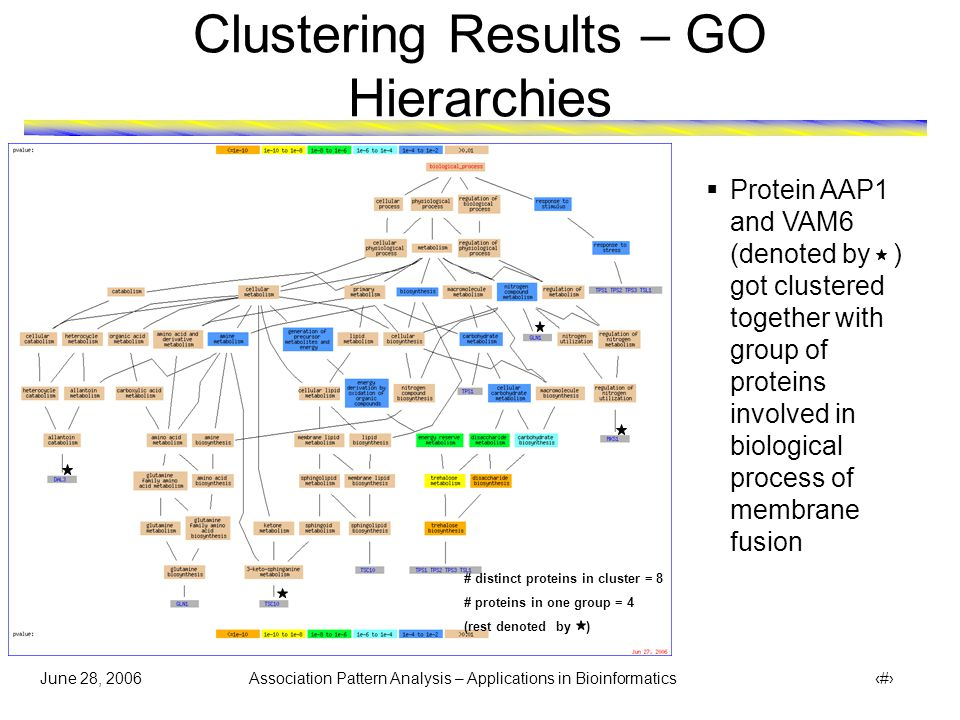 June 28, 2006 Association Pattern Analysis – Applications in Bioinformatics 35 Clustering Results – GO Hierarchies # distinct proteins in cluster = 7 # proteins in one group = 5 (rest denoted by )