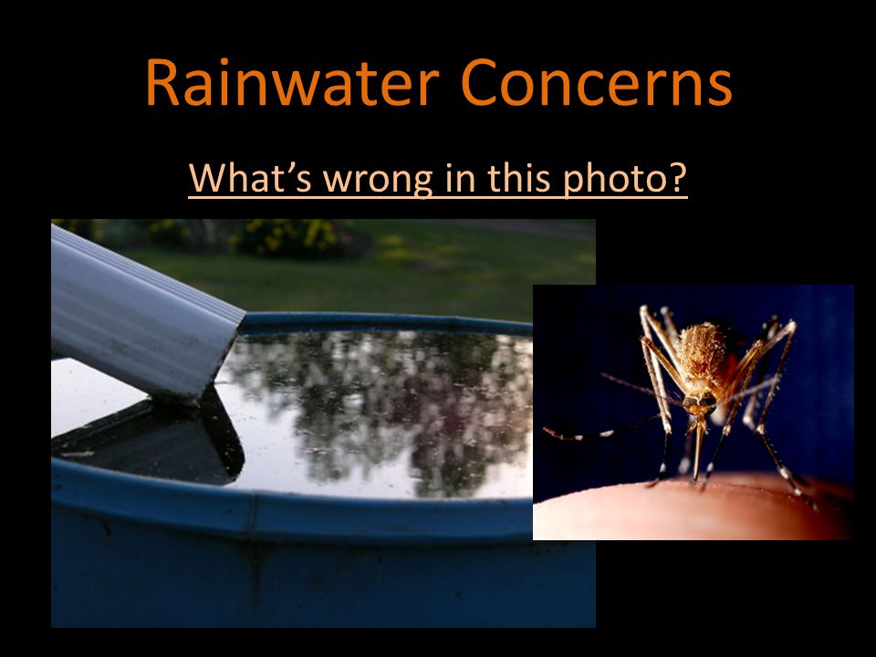 Rainwater Uses Lawn and Garden Irrigation Lawn and Garden Irrigation Toilet Flushing Toilet Flushing Washing Livestock Washing Livestock Car Washing Car Washing Indoor Plant Watering Indoor Plant Watering Pet and Livestock Watering Pet and Livestock Watering Evaporative Coolers Evaporative Coolers