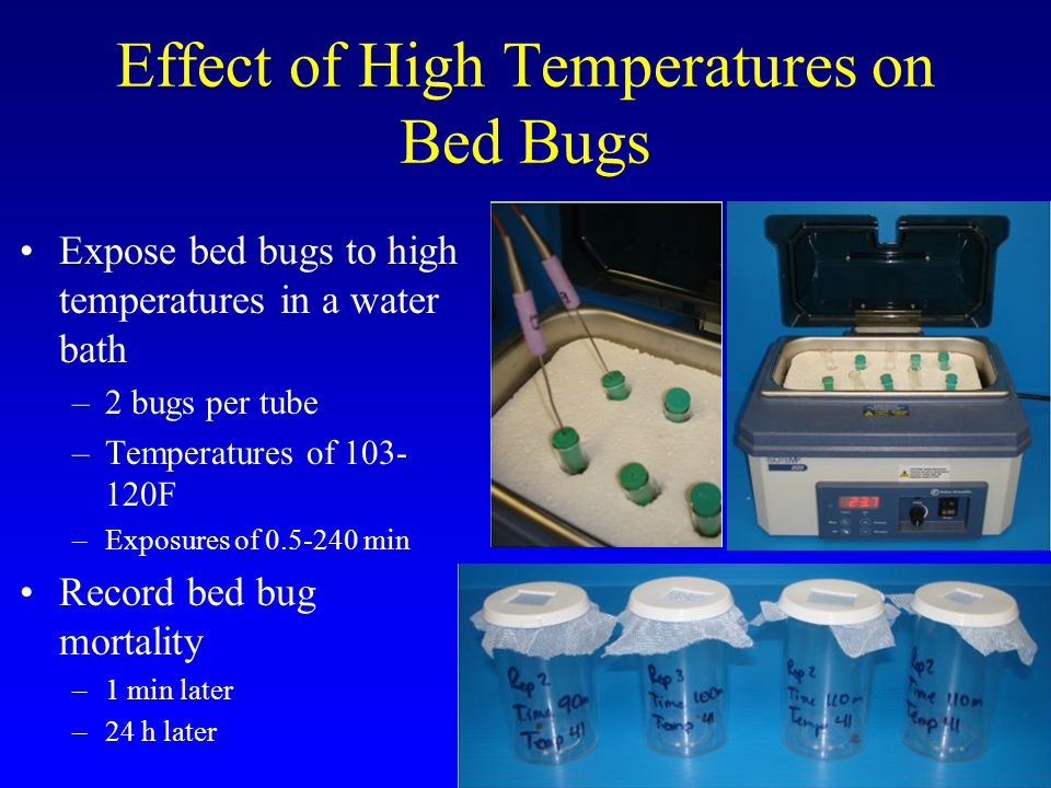 How long does it take to kill bed bugs with heat.