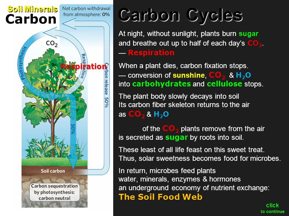 Some carbon stays in soil as dark, spongy organic matter — humus.