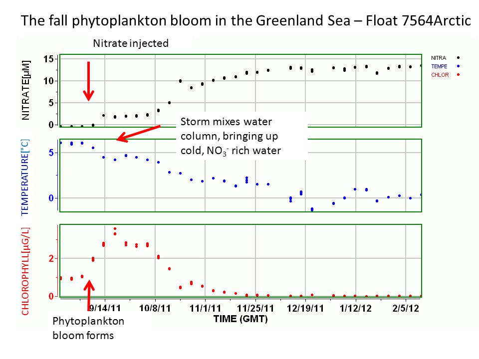 CHLOROPHYLL[µG/L] TEMPERATURE[°C] The fall phytoplankton bloom in the Greenland Sea – Float 7564Arctic Vigorous mixing cools water, injects more nitrate, dilutes chlorophyll faster than plankton can grow
