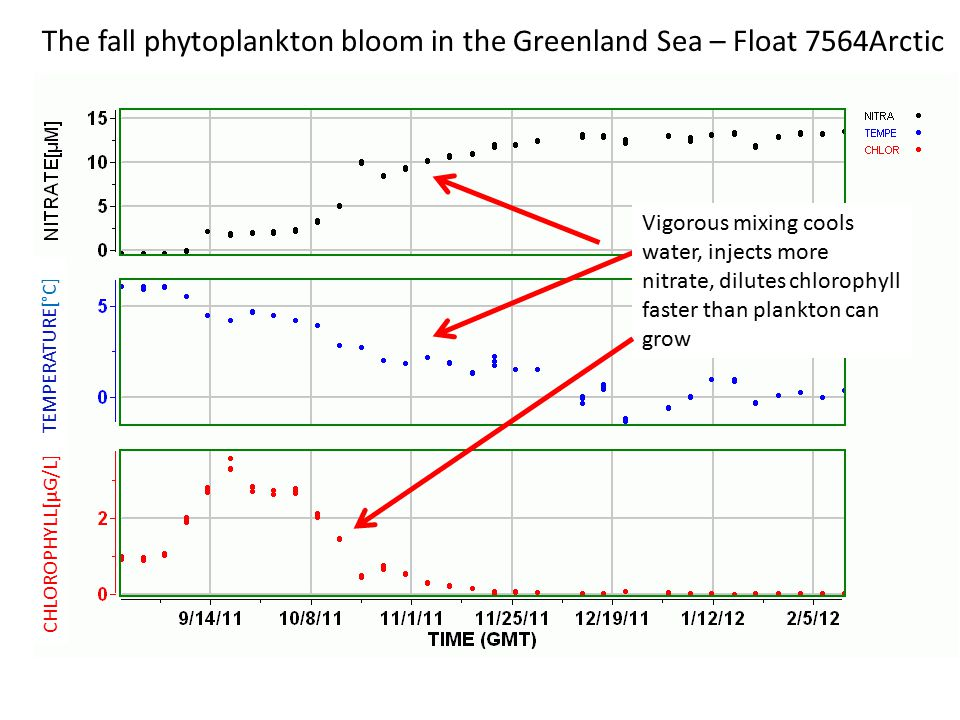 CHLOROPHYLL[µG/L] TEMPERATURE[°C] The fall phytoplankton bloom in the Greenland Sea – Float 7564Arctic Vigorous mixing cools water, injects more nitrate, dilutes chlorophyll faster than plankton can grow When does water start to warm.