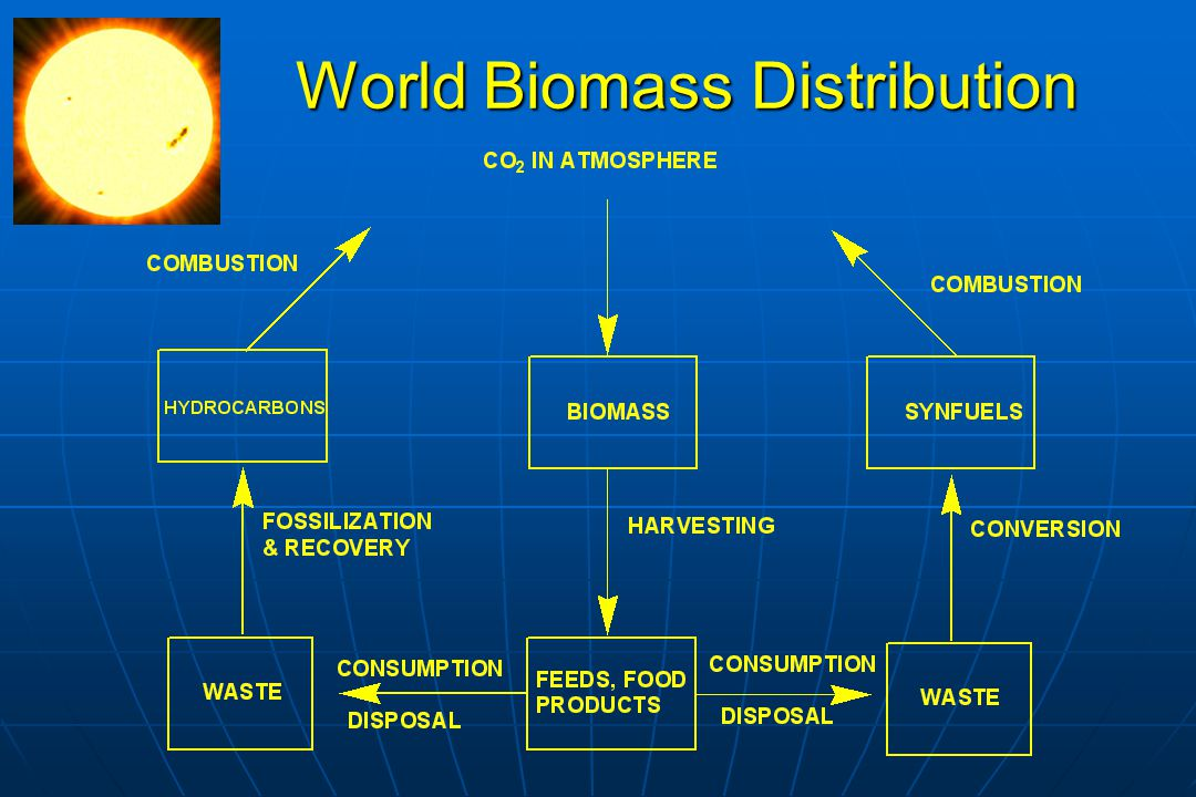 Global Energy Potential Total biomass energy available now represents 100 times world's annual energy consumption Total biomass energy available now represents 100 times world's annual energy consumption Worlds standing terrestrial biomass Worlds standing terrestrial biomass Forests have 80-90% total biomass carbonForests have 80-90% total biomass carbon Marine biomass C next most abundant, but high turnoverMarine biomass C next most abundant, but high turnover Capture efficiency of sunlight generally low; Hawaii sugarcane is one of highest = 2.24% (186W/m 2 for 74.9 t/ha-year)* Capture efficiency of sunlight generally low; Hawaii sugarcane is one of highest = 2.24% (186W/m 2 for 74.9 t/ha-year)* *Berguson, W.