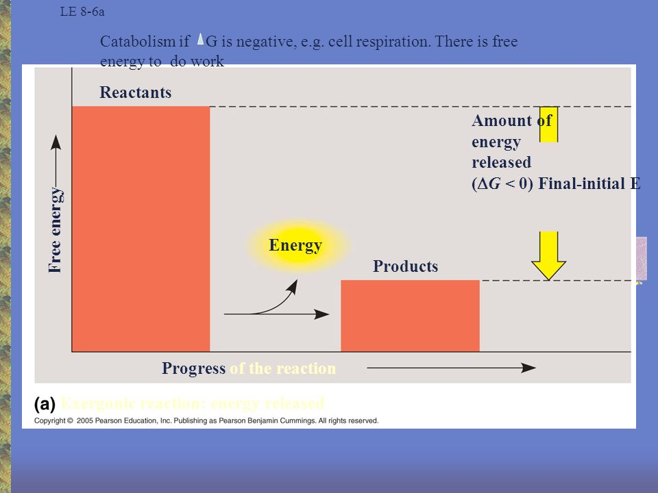 LE 8-6b Reactants Energy Products Progress of the reaction Amount of energy required (  G > 0) Free energy Endergonic reaction: energy required Anabolism if G is positive, then it cannot do work, energy is bound up (photosynthesis=endergonic)