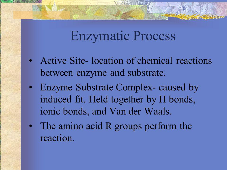 R groups of Amino Acids
