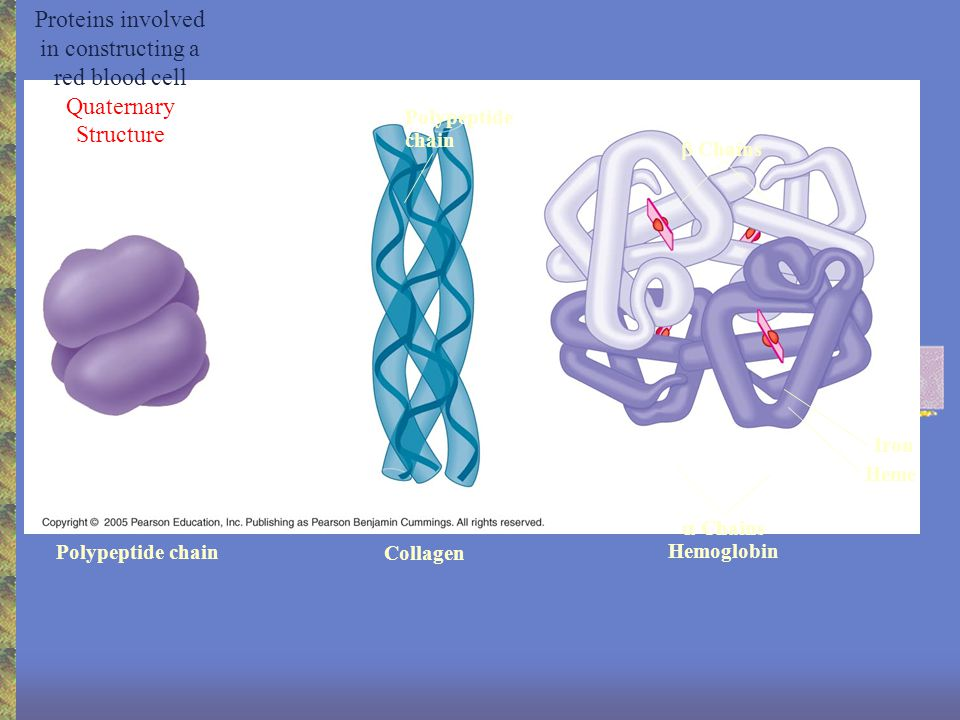 Bioenergetics Enzymes are needed in all efficient energy reactions.