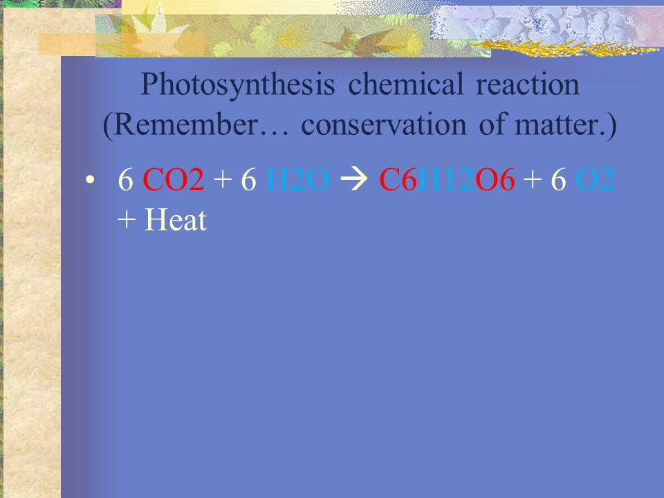 Photosynthesis Take radiant energy and convert into chemical energy (ATP & NADPH) Take chemical energy (ATP & NADPH) and turn it into potential chemical energy (carbohydrate).