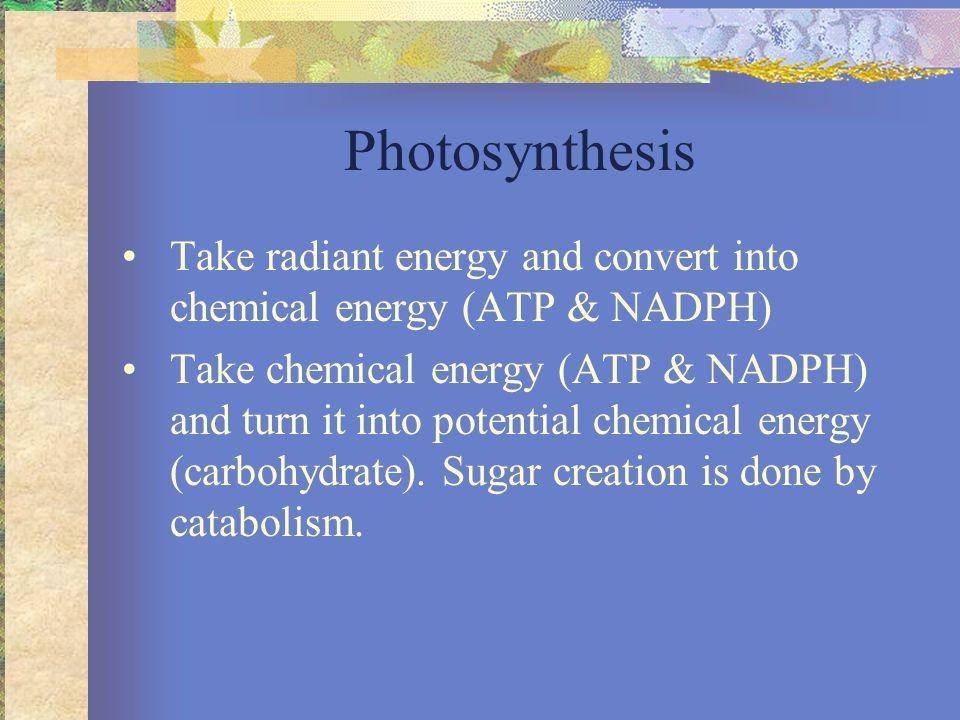 Photosynthesis Light Reaction