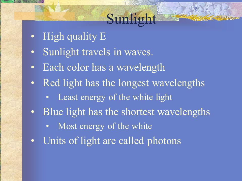 Chloroplasts REFLECTING Green Light White light Refracting prism Chlorophyll solution Photoelectric tube Galvanometer The high transmittance (low absorption) reading indicates that chlorophyll absorbs very little green light.