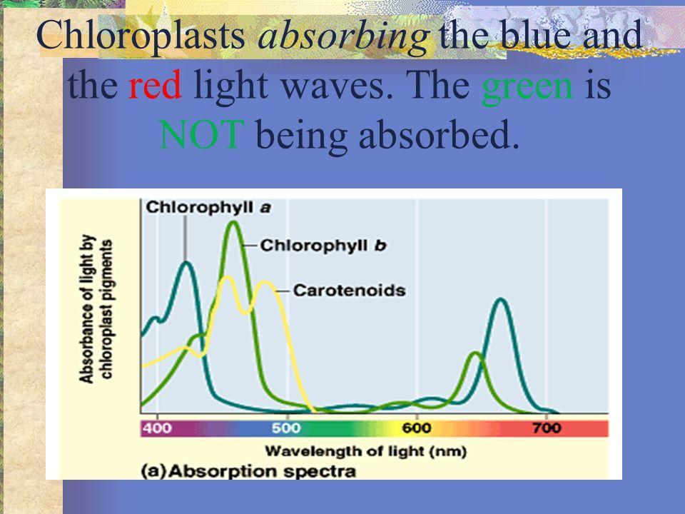 Light Absorption vs.