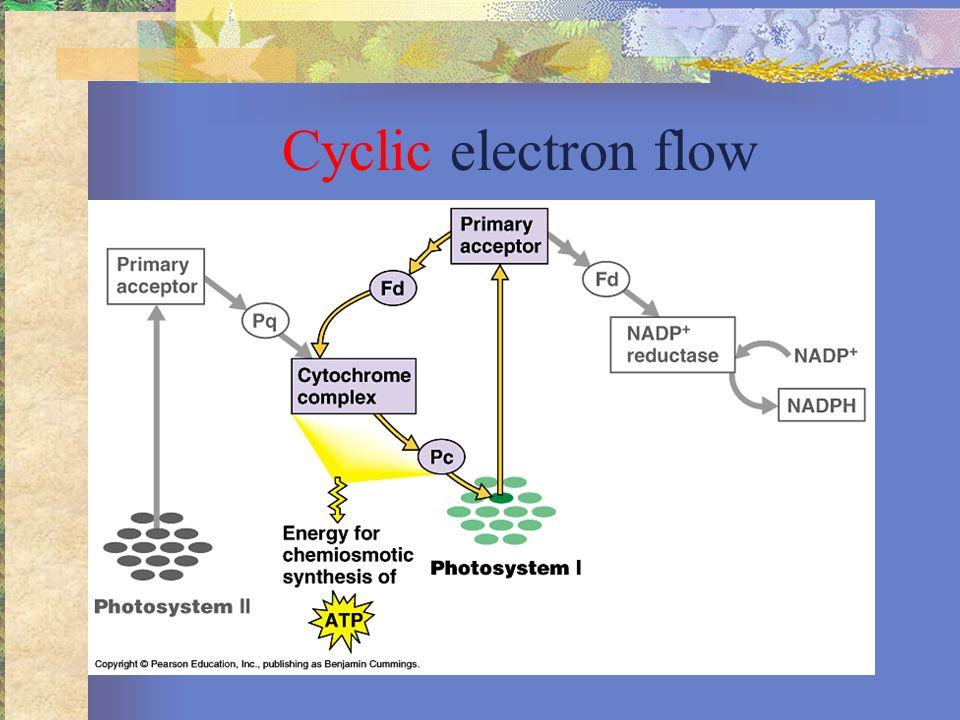 Photosynthesis 1.Sunlight strikes the Photosystem II, 2 H2O enters Photosystem II.