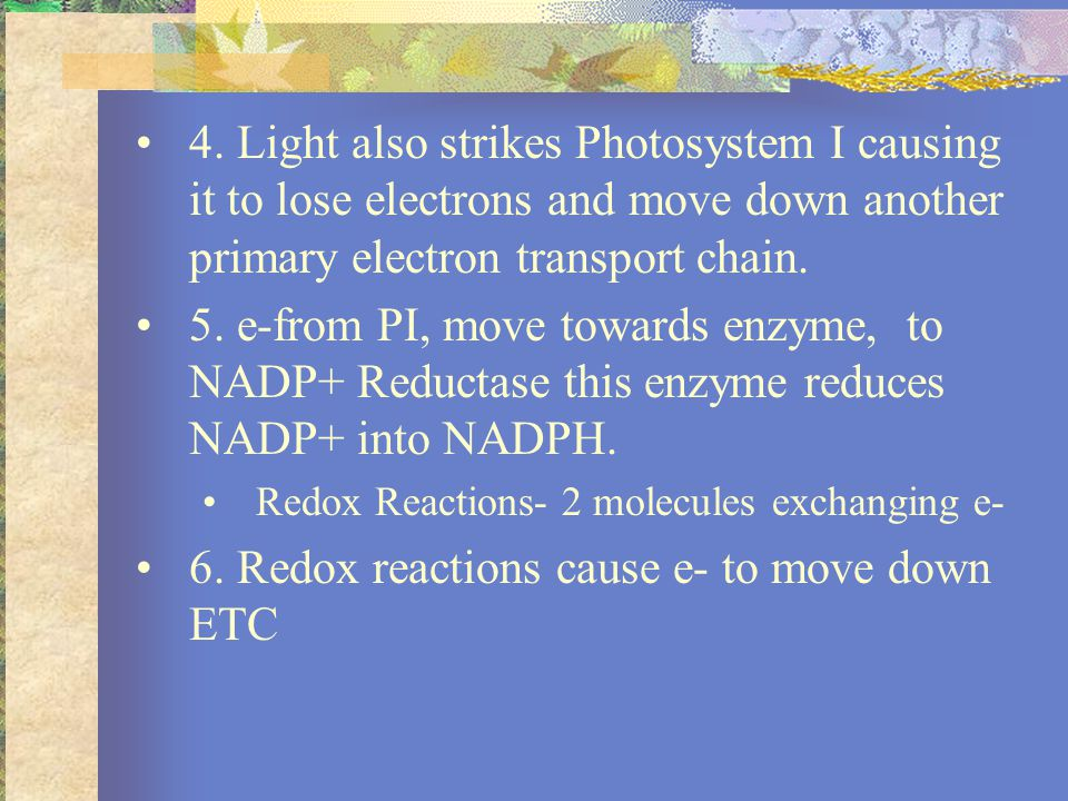 7.As e- move down the ETC, they power proton pumps (H+) with their kinetic energy.