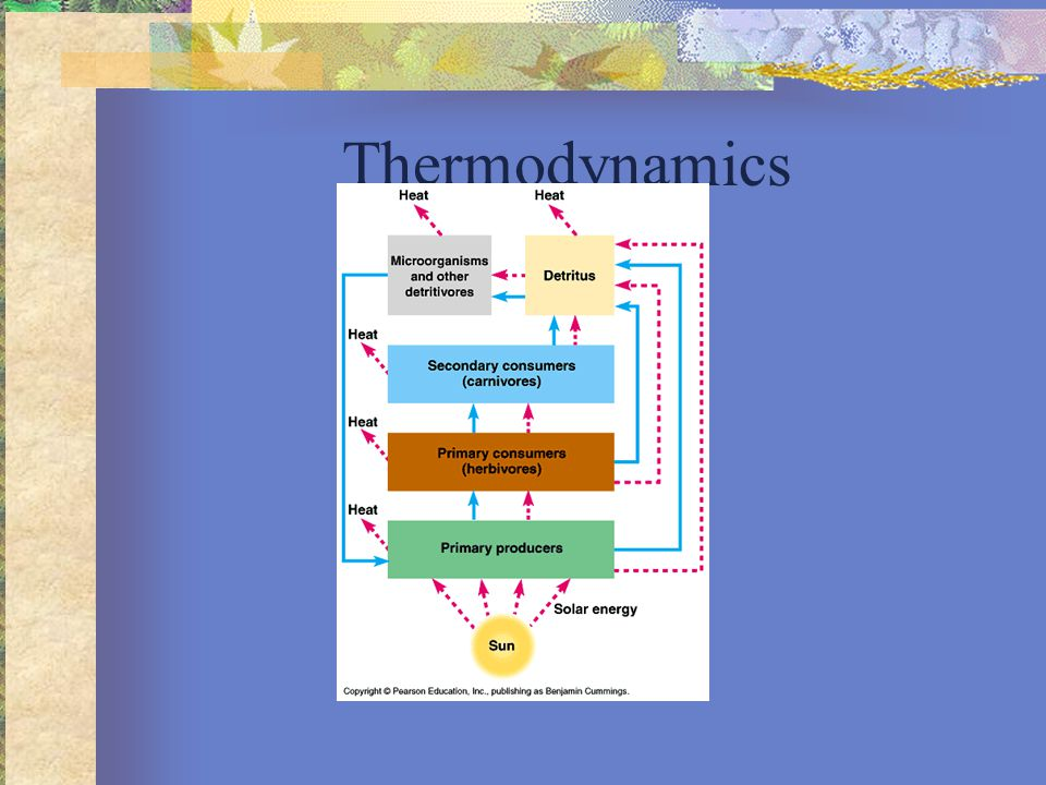 LE 8-3 Chemical energy Heat CO 2 First law of thermodynamicsSecond law of thermodynamics H2OH2O Sunlight is high quality E, Heat is low quality E